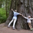 Try to embrace sequoia